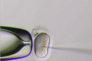 first embryo Genes