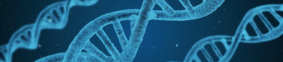 Print genetic code