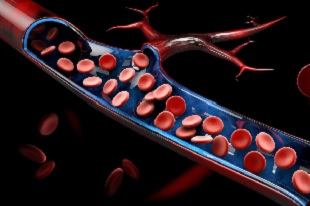 mitochondria in human blood