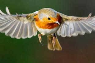 birds vision
