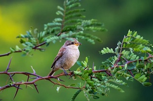 greater number of bird species related to well-being