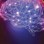 brain structure changes
