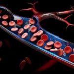 mitochondria in human blood