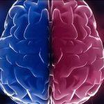 brain androgyny